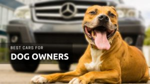 The 16 Best Cars for Dog Owners to Buy in 2019