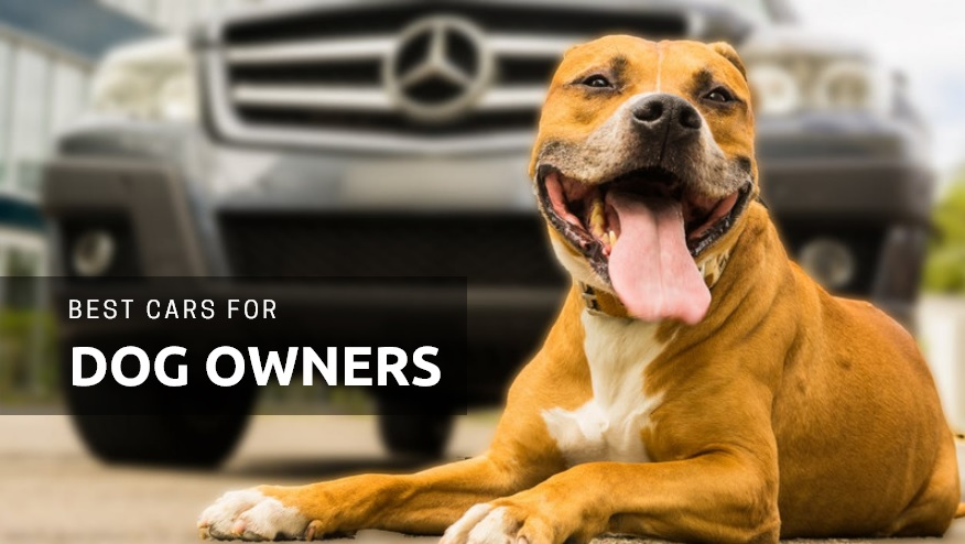 The 15 Best Cars for Dog Owners to Buy in 2019